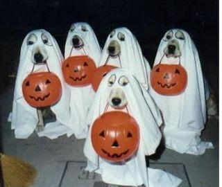 Ghostdogs