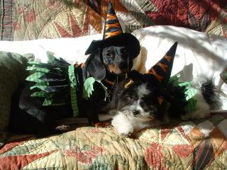 Halloween puppies 002